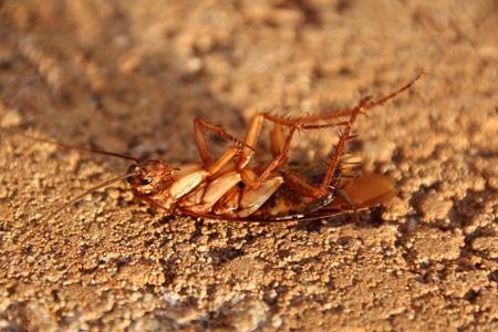 Se débarrasser des blattes ou cafards